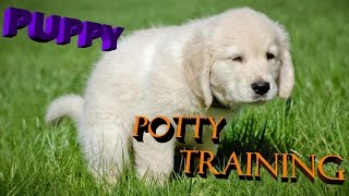 Puppy potty training in a Very easy way hindi / urdu 2017 : dog training in hindi