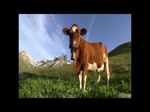 Cow bell (official sound) HD