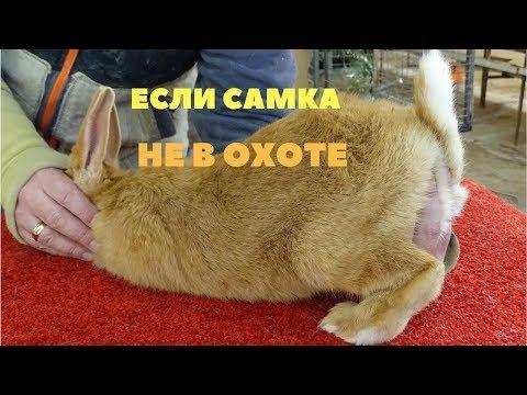 Как сделать чтобы крольчиха пришла в охоту