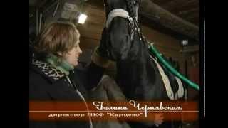 Фризская порода лошадей, программа Живой дом.