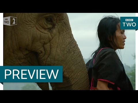 Living among elephants: Thailand: Earth's Tropical Paradise: Episode 3 Preview - BBC Two