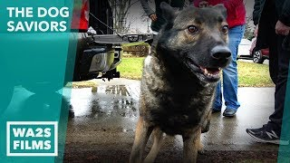 Scared Feral Dingo Dog Breaking Hearts Gets New Life! The Dog Saviors - Hope For Dogs | My DoDo