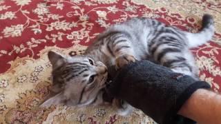 Кот кусается Cat bites