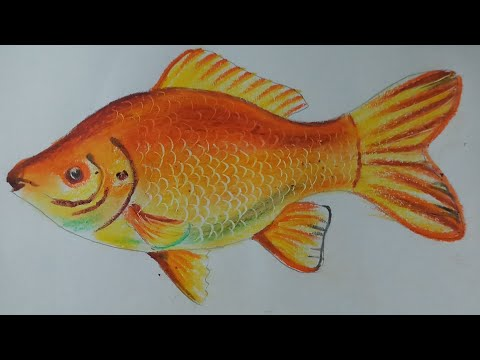 How To Draw A Gold Fish With Oil Pastel | Kids Drawing
