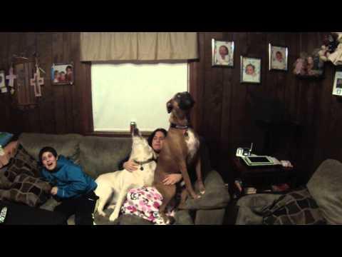 dog singing national anthem