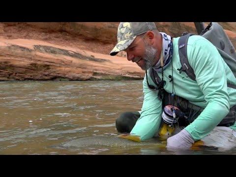 Pesca Dorado Golden Route Rio Dorado 1 de 3 Aguas Arriba ESPN Latinoamérica Temporada:11 E:15 2017