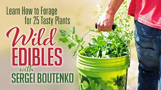 Wild Edibles with Sergei Boutenko | Learn How to Forage for 25 Tasty Plants