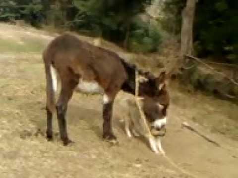 animales locos amor a lo burro