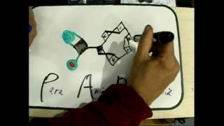 PABA  Para Amino Benzoic Acid ceramide jun2010