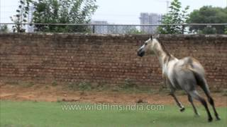 Winning horses are born here in Gurgaon's stud farms