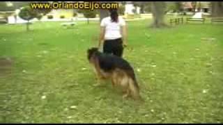 Perros - Cómo Educar El Paseo -