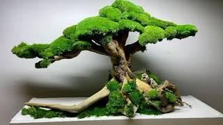Handmade Bonsai Tree