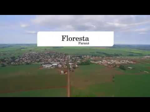 Floresta Paraná fonte: i.ytimg.com