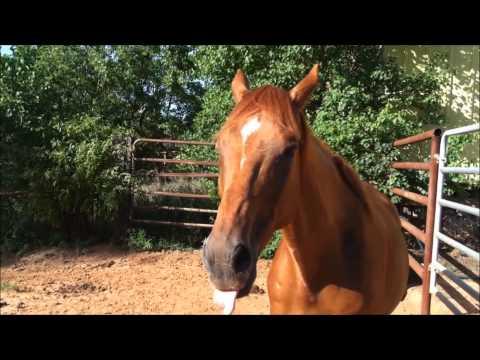 "Kirby ""THE TALKING HORSE"" - Happy Birthday Greg Gutfeld"