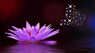 Guided Meditation for Kids | HEALING WATER LILY | Mindfulness Meditation for Children