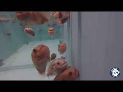 Lumpsuckers Move Into New Space