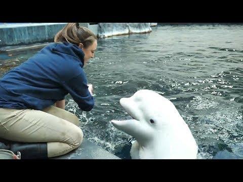 'Kelsey and Her Beluga Bestie' by Aquarium Love Stories