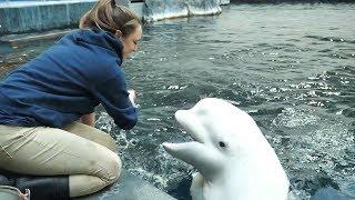 """""""Kelsey and Her Beluga Bestie"""" by Aquarium Love Stories"""