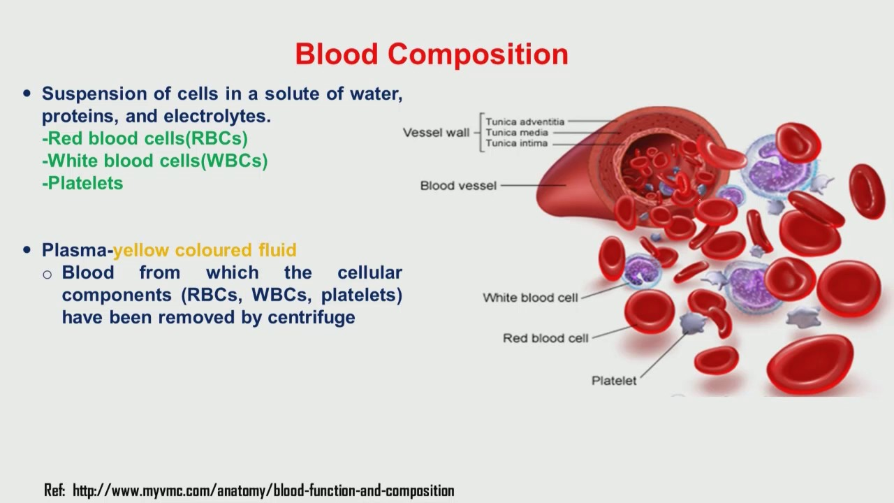 red blood cells essays Red blood cells (also known as rbcs, red blood corpuscles or erythrocytes) are cells in the blood which transport oxygen in women, there are about 48 million red blood cells per microliter of blood in men, there are 54 million red blood cells per microliter of blood.