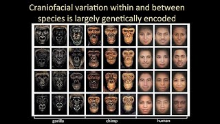 CARTA: Wysocka-Human Neural Crest; Varki-Sialic Acid Biology; Polleux-Cortical Connectivity thumbnail