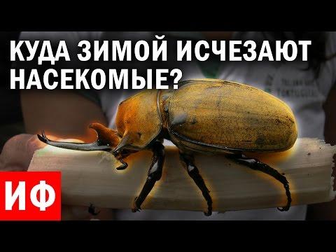 Как зимуют комары зимой