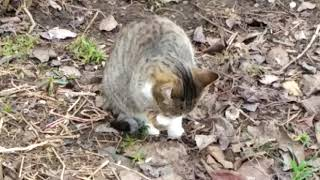 Милый котёнок   ОБЫЧНЫЕ КОТЫ #1