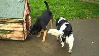 Dogs Trust Kenilworth: Lucy