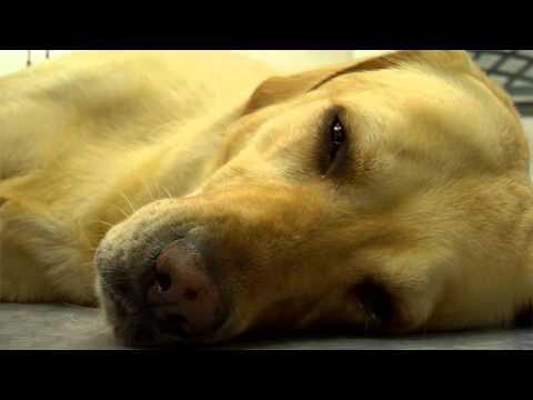 Enfermedades en perros -Wanda - TvAgro por Juan Gonzalo Angel