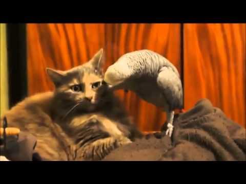 Кот и попугай смешное видео