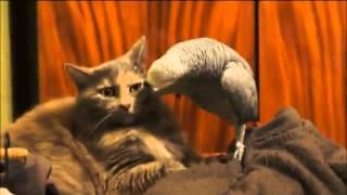ПРИКОЛ Попугай и Кот (СМЕШНО, ПРИКОЛЫ С КОТАМИ И КОШКАМИ)