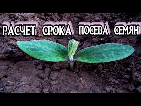 Сроки Посева Семян на Рассаду - Когда Сеять Семена