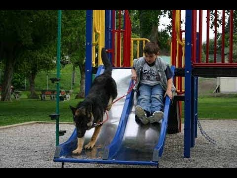 Dogs and Kids Have Fun Time  on Slides -  Dog and baby Compilation
