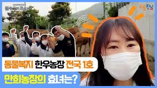 [해남]전국1호 동물복지 한우농장☆만희농장 선정