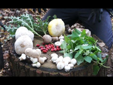CampAesthetics 12 - Wild Food, Fire & Fungi