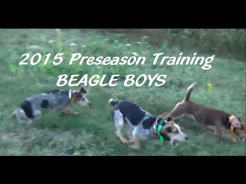 2015 Preseason Training - Beagle Boys Rabbit Hunting 2015