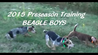 2015 Preseason Training - Beagle Boys Rabbit Hunting 2015