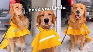 Tucker Hates His Raincoat