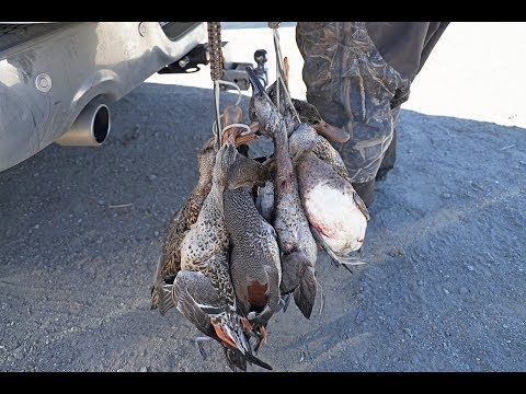 Public Lands CA DUCK HUNT Early November | Colusa Wildlife Refuge