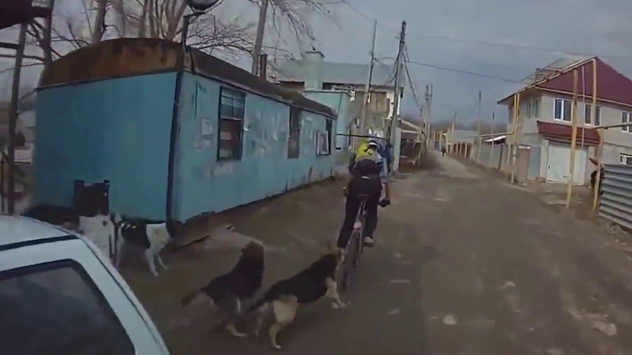 Как действует электрошокер от собак Видео: Шокер и собаки
