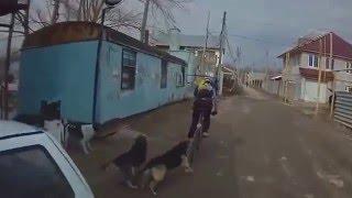 Как действует электрошокер от собак Видео: Шокер и собаки(Купить электрошокер от собак: http://shok102.ru Подпишись на канал шокер видео: https://www.youtube.com/channel/UCjw-vbyRTmsZ9yVTkLzMfkQ., 2016-05-10T13:21:08.000Z)