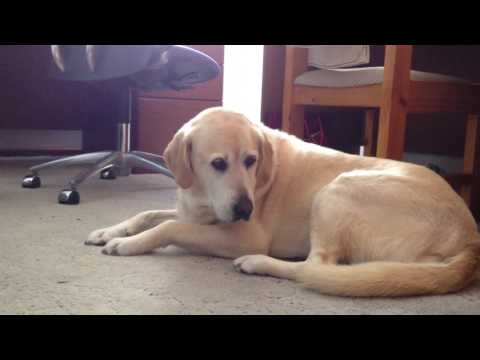 Dog reacts to Classical Music