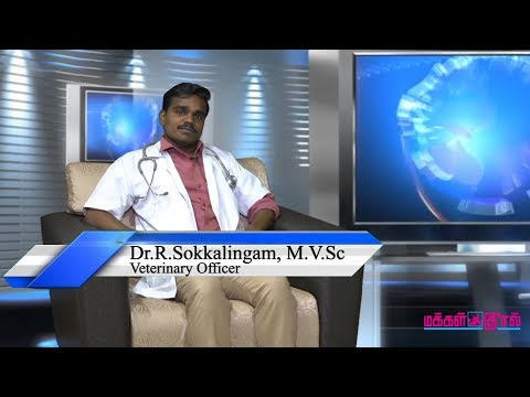 Interview with Veterinary Office Dr. Sokkalingam
