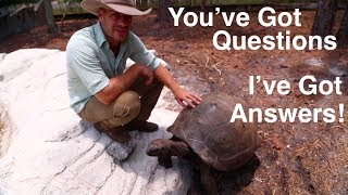 Answering all Ask Kenan Reptile, Turtle & Tort questions in May