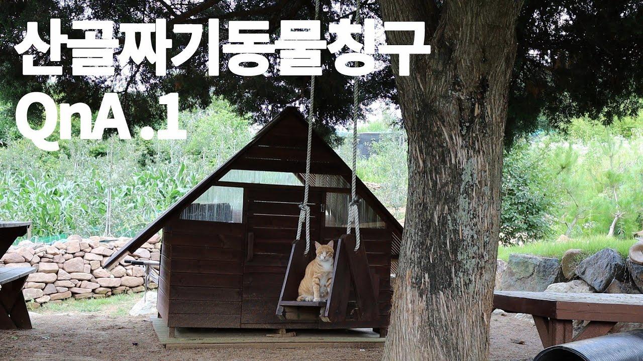 산골짜기동물칭구 QnA 영상