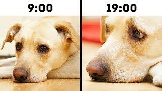 애완동물의 수명을 단축하는 흔한 실수 10가지