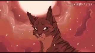 Кто ты из котов - воителей по знаку зодиака . ЧИТАТЬ ОПИСАНИЕ)))