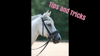 How to bridle a difficult horse // Tips from Deanna Corby Dressage