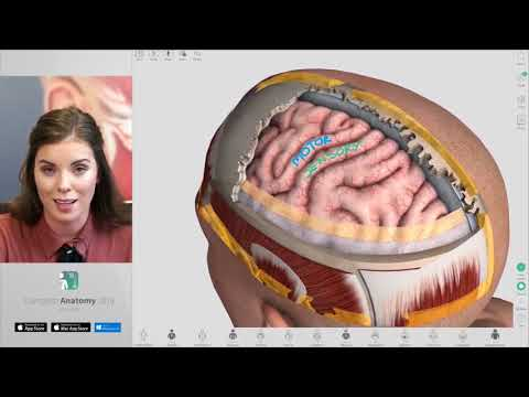 Tips for creating Screens and Recordings in Complete Anatomy 2018 + Courses