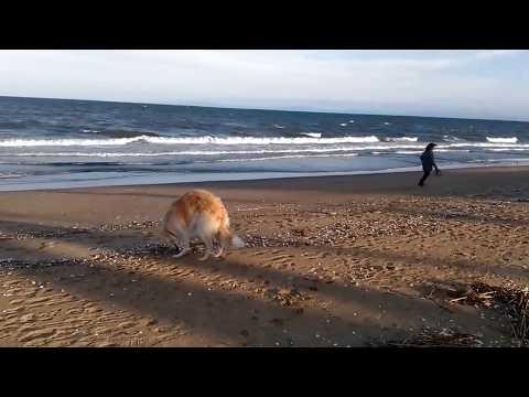 海岸風強し『陸、お母さんの所へ!』