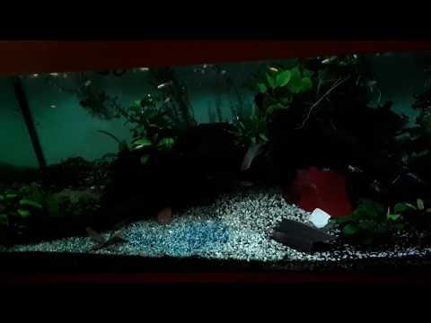 Купил ночной свет в аквариум +блютус s Али. Небольшой обзор ленты и настроек, плюсы и минусы.